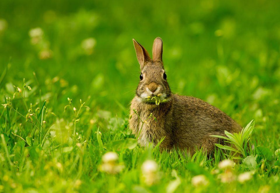 مزایا و معایب بازی کردن با خرگوش