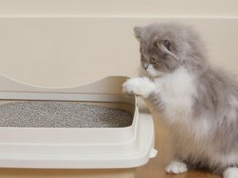 نحوه استفاده ظرف خاك به بچه گربه