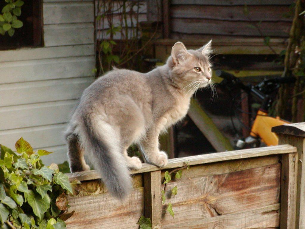 راه های نشان دادن علاقمندی گربه به شما