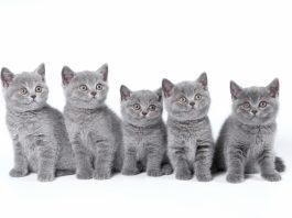 آشنایی با مراحل رشد بچه گربه