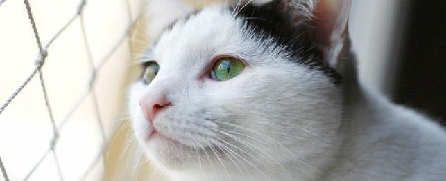آموزش گرفتن نبض گربه