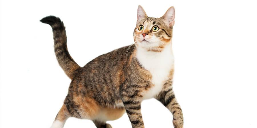 آشنایی با اصول نگهداری گربه