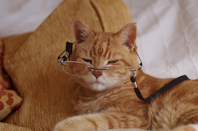 آشنایی با پیری در گربه older cat