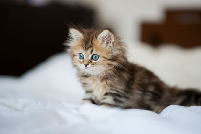 آشنایی با رفتار شناسی گربه