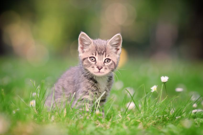 آشنایی با مهمترین رفتارهای گربه