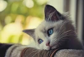 آب دادن به جاي شير به بچه گربه نوزاد