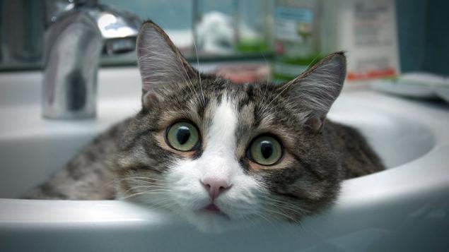 باید هر چند وقت گربه را بشوئیم؟