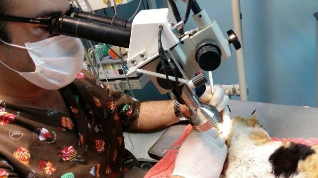 گفتوگو با نخستین دندانپزشک حیوانات در ایران