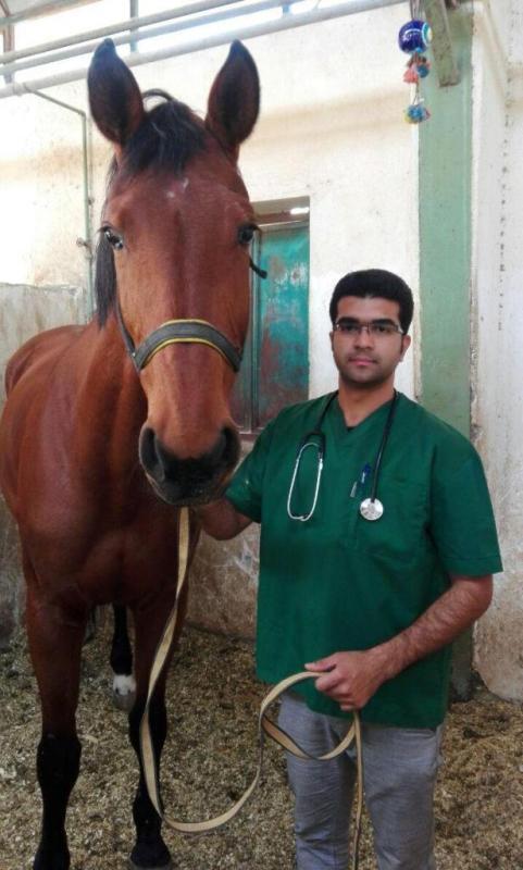 گفتوگو با «دکتر میثم یزدانی» دامپزشک دندانپزشکی اسب