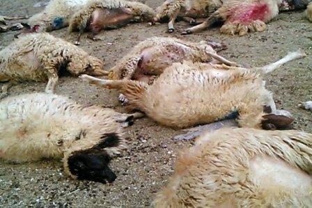 برگزاری دوره بازآموزي مروري بر بيماريهاي گوسفند و بيماريهاي متابوليک در استان کردستان