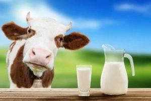 قانون های برای تغذیه گاو های شیری