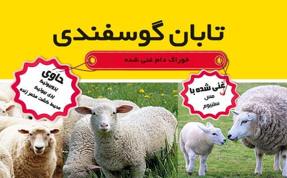 آشنایی با تابان گوسفندی