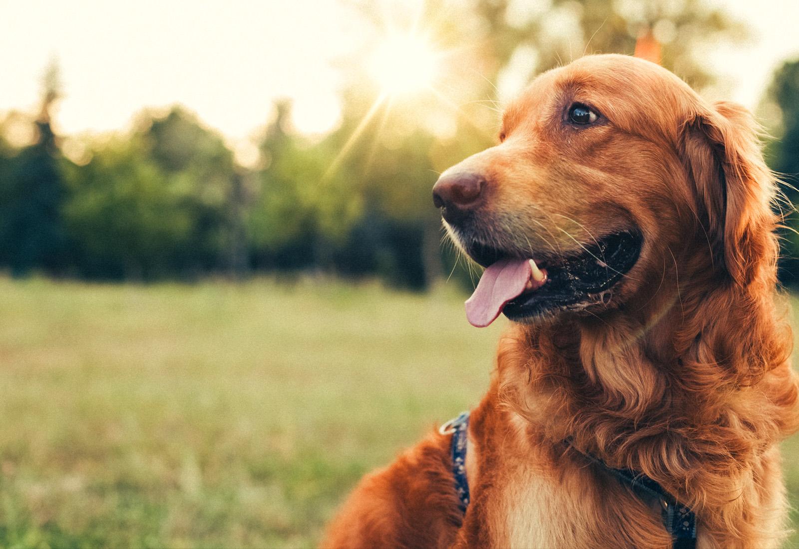 تغذیه سگ در دوران آبستن و شیردهی