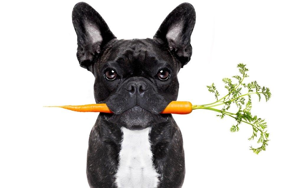 غذاهایی که نباید به سگ داد