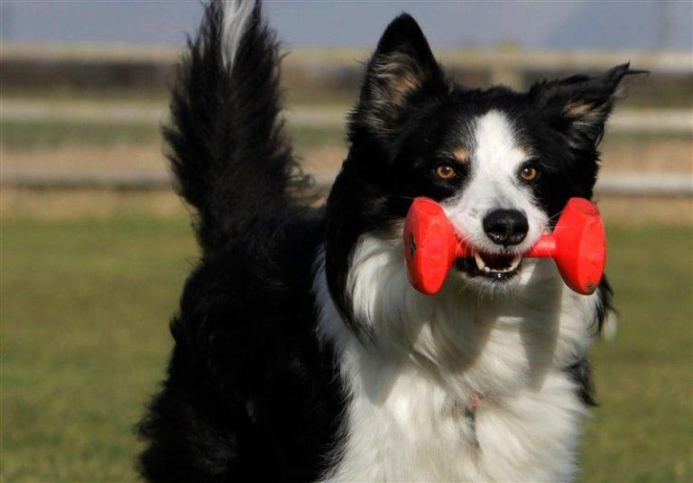حقایق جالب و شگفت انگیز درباره سگ ها و زندگی سگ ها