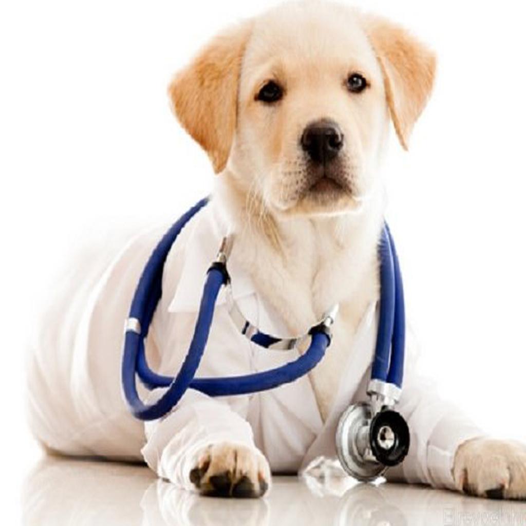 بیماری های سگ